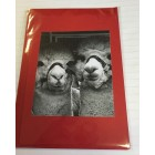 Alpaca Greeting Cards - Double Trouble